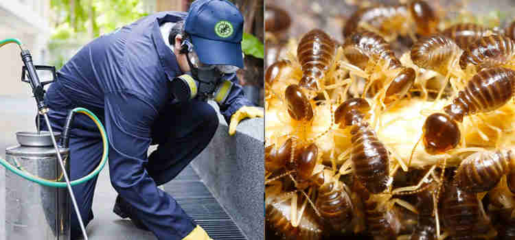Pest Control Elaman Creek