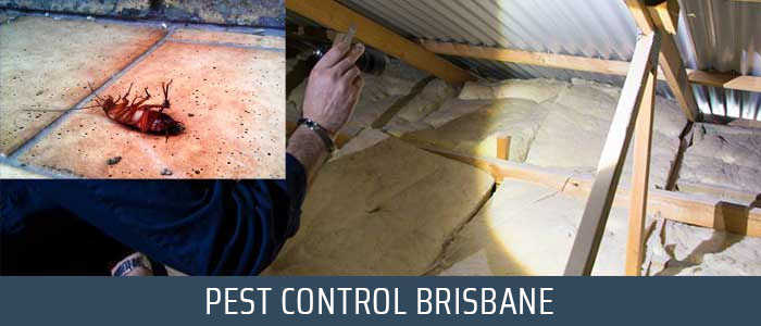 Pest Control Mount Crosby