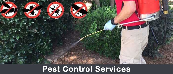 Best Pest Control Services Myers Flat