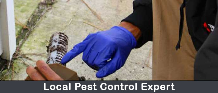 Amazing Pest Control Services Seymour