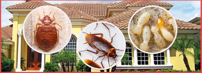 Residential Pest Control Mount Crosby