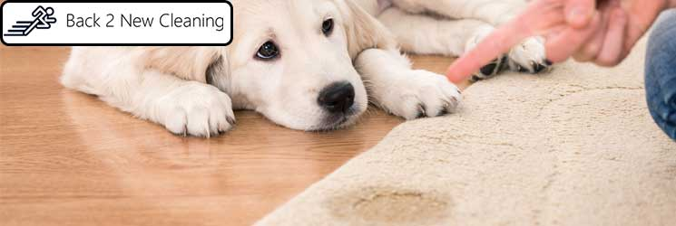 CARPET PET URINE STAINS REMOVAL