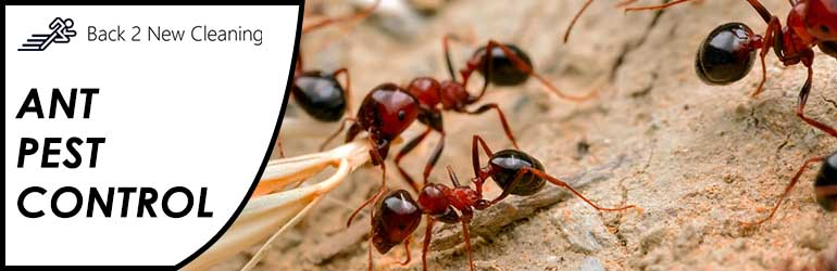 Ant Control Inman Valley