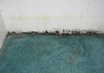 Carpet Mould Removal Exeter
