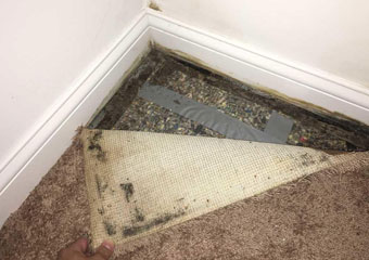 Carpet Mould Removal Canberra