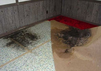 Carpet Mould Removal Cairns Bay
