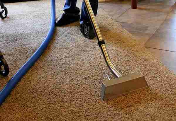 Effective Ways to Remove Pet Urine Smell and Stains From Carpet