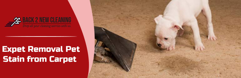 Remove Pet Stain From Carpet