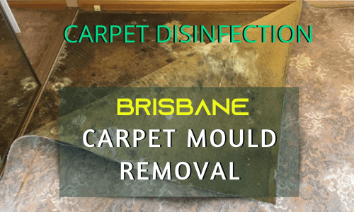 Carpet Mould Removal & Disinfection Service brisbane