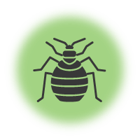 Mattress Dust Mites And Bed Bug Removal