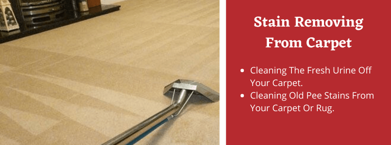 Stain Removing From Carpet