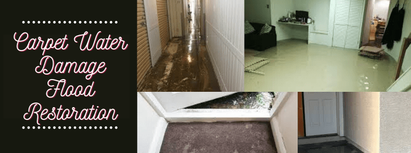Carpet Water Damage Flood Restoration Coorparoo
