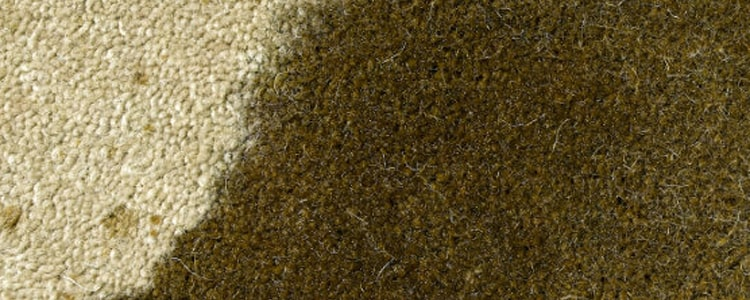 Remove Oil Stains From Carpets