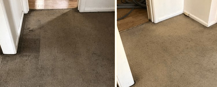 Best Carpet Cleaning Services in Brisbane