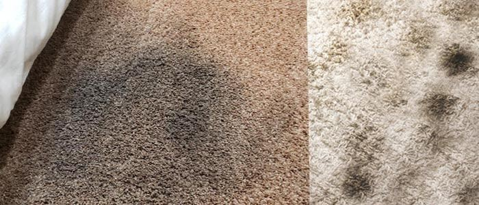 Carpet Mould Removal Service Armstrong Creek